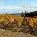 Le Vignoble Gaillacois depuis plus de 2000 ans
