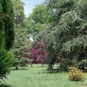 Arbres centenaires du parc du Domaine Lalande